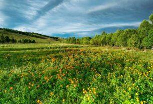 Czym jest biodynamiczny kalendarz rolników?